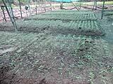 GGRC ltd. Checkdams Repairing and Agriculture Diversification